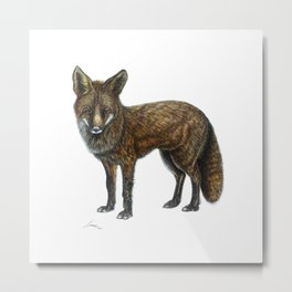 The Red Fox Metal Print