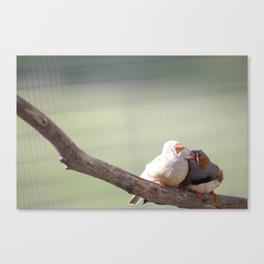 Finchy Cuddles @ Happy Hooves Farm Sanctuary Australia Canvas Print