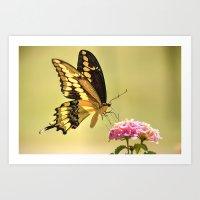 Giant Swallowtail Art Print