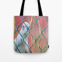 Curious Cockie Tote Bag