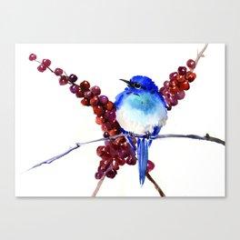 Bird Blue red , Mountain Bluebird adn berries Canvas Print