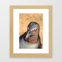 African Penguin Framed Art Print