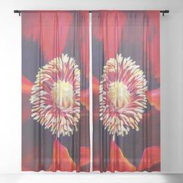 Big Red Poppy Sheer Curtain