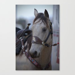 Horse in bridle Canvas Print