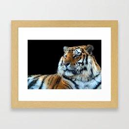 Sumatran Tiger - Panthera Tigris Sumatrae Framed Art Print