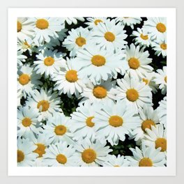 Daisies explode into flower Art Print