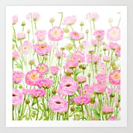 pink buttercup ranunculus field watercolor Art Print