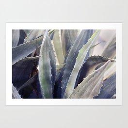Winter Agave Art Print