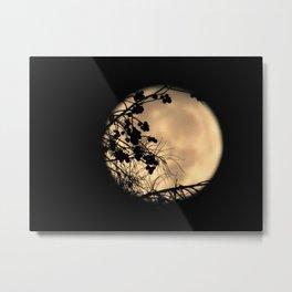 Crepe Myrtles and Moonlight Metal Print