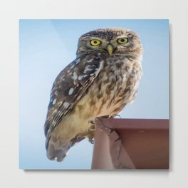 Cute Barn Owl Making Eye Contact Vector Metal Print