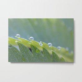 Dew Drop Metal Print
