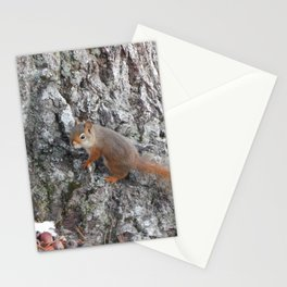 Acadia Squirrel Stationery Cards