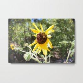 Sunflower Bee Metal Print