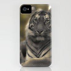 Golden Tiger 2 iPhone (4, 4s) Slim Case