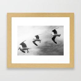 Birds bw Framed Art Print