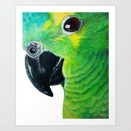 Amazon Parrot Acrylic Painting Art Print