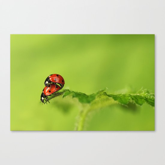 Ladybirds in spring Canvas Print
