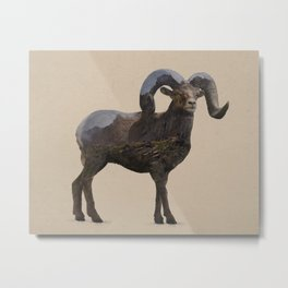 The Rocky Mountain Bighorn Sheep Metal Print