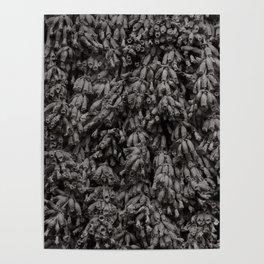 Dead Lavender in Monochrome Poster