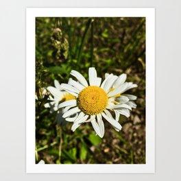 Daisy, Daisy Art Print