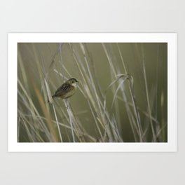 Little Brown Bird Art Print