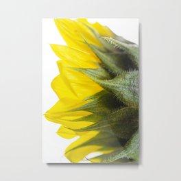 Sunflower IV Metal Print