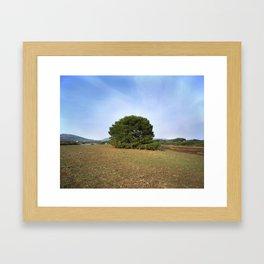 Lonely bush. Framed Art Print