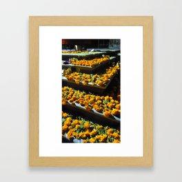 marigolds Framed Art Print