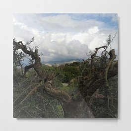 Countryside Hills Landscape with Olive Tree Metal Print