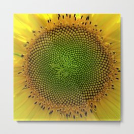 All right, Mr. DeMille, I'm ready for my close-up - Sunflower photography by Jéanpaul Ferro Metal Print