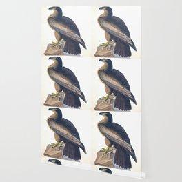Bird of Washington John James Audubon Scientific Vintage Illustrations Of American Birds Wallpaper