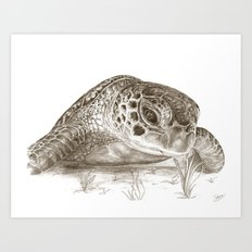 A Green Sea Turtle :: Earthtones Art Print