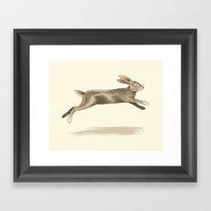 Wild Rabbit Framed Art Print