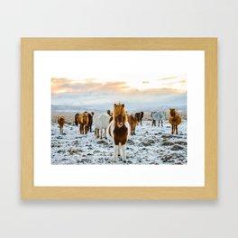 Nordic Wild Framed Art Print