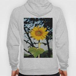 Tall Sunflower Hoody