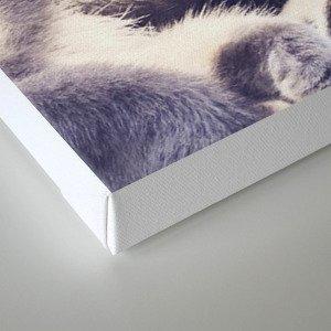 Cats again Canvas Print