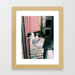kedi.4 Framed Art Print