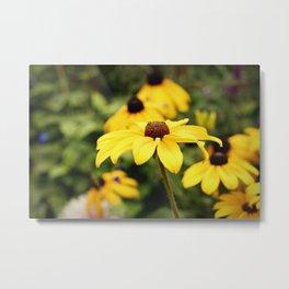 Black-Eyed Susan's (Flowers) Metal Print