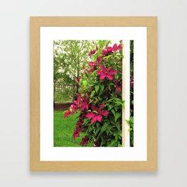 Rouge Cardinal Clematis 2 Framed Art Print