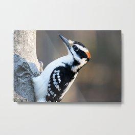 Woodpecker Metal Print