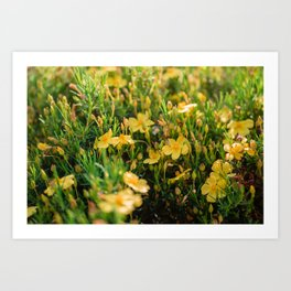 Tiny Yellow Flowers Art Print