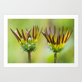 Details of two yellow flowers Art Print