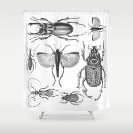Vintage Beetle black and white drawing Shower Curtain