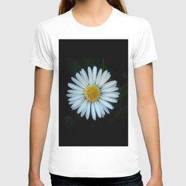 Daisy 3- Marguerite – margarita-oxeye T-shirt