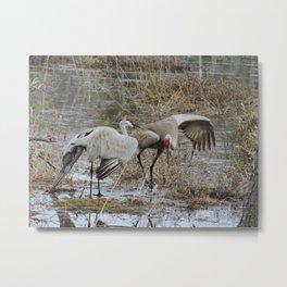 Crane Mating Dance 1 Metal Print
