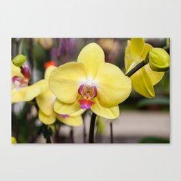 Orchids 17-6 Canvas Print