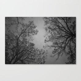 The Birds Are Spies, They Report to the Trees Canvas Print
