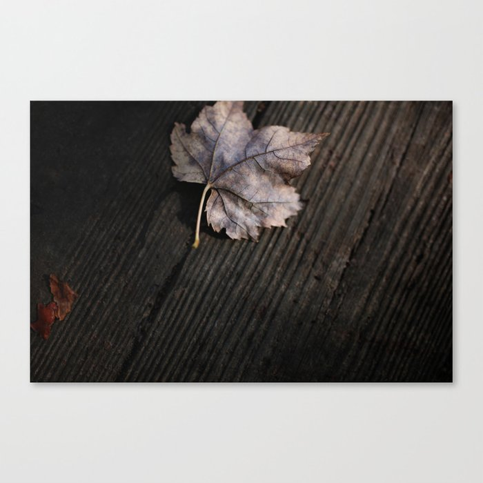 the lifelines of fall 2 Canvas Print