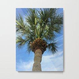 Florida Sabal Palm Tree in Blue Sky Metal Print