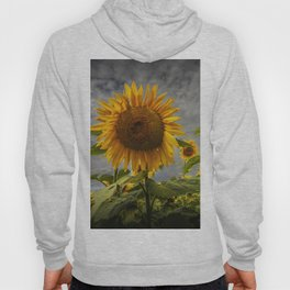 Sunflowers Blooming in a Field Hoody